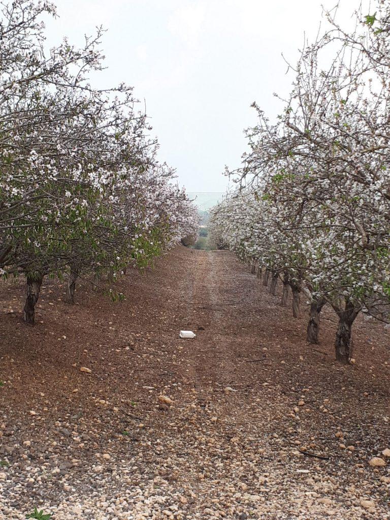 שקדיה בעמק יזרעאל טיול בשטחים חקלאיים