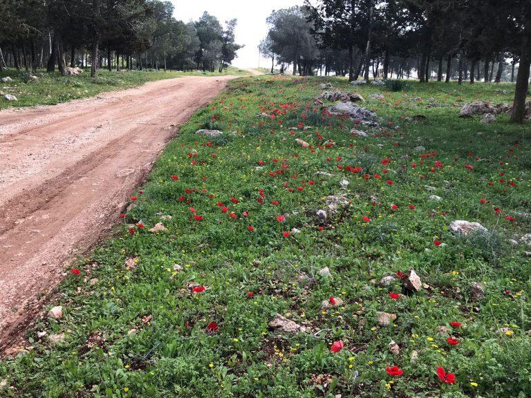 גבעת המורה עפולה טיול בשטחים חקלאיים