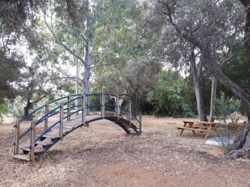 לחם טנא גשר הזיו