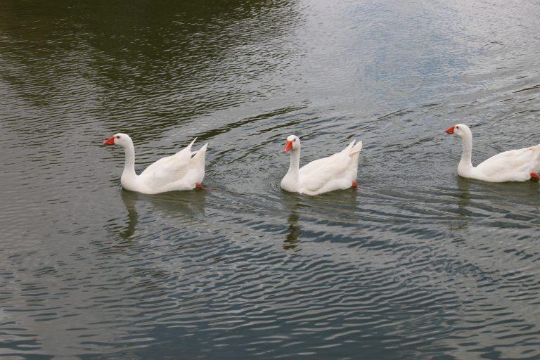 אגם ספיר