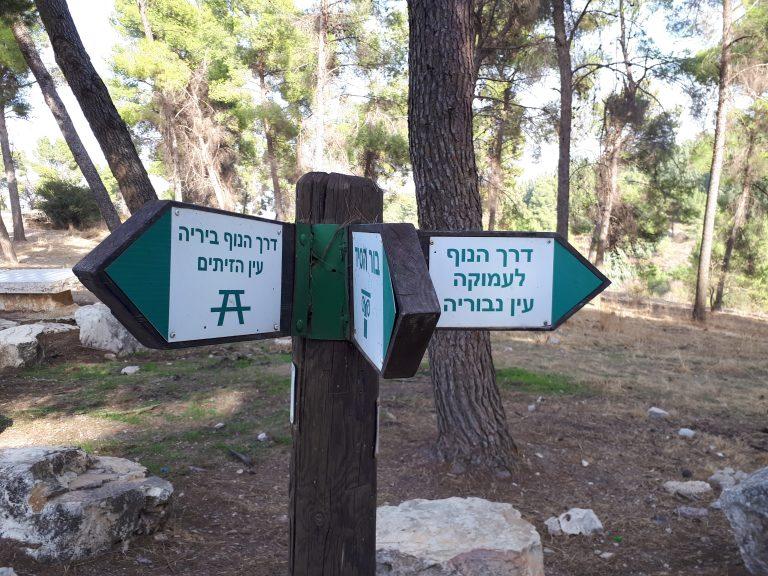 יער בירייה, מסלול רכוב