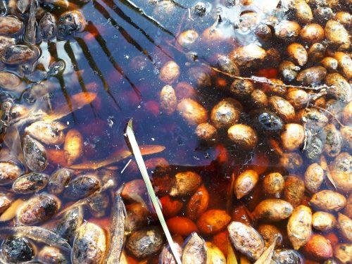 בל עפרי קדמת צבי