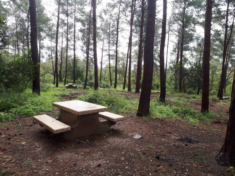 יער חניתה