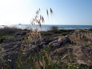 חוף בצת
