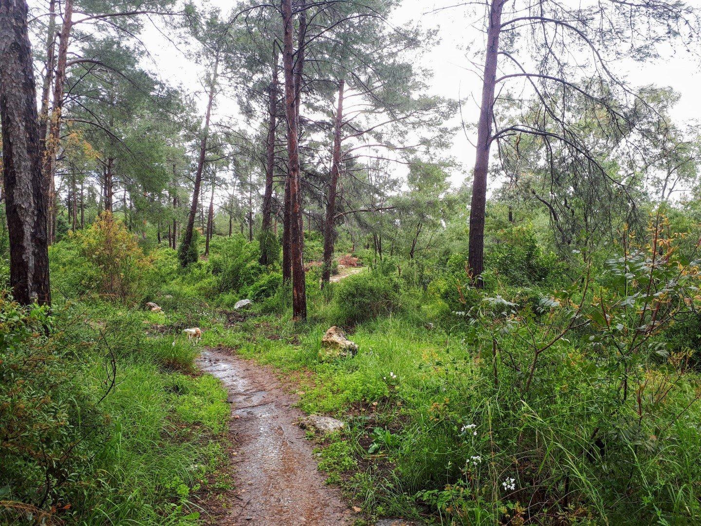 יער חניתה טיול בגליל המערבי