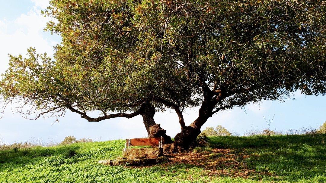 שביל אילן טבעון