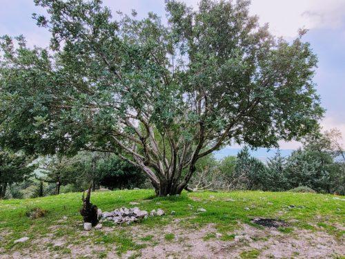 יער בלפור עמק יזרעאל