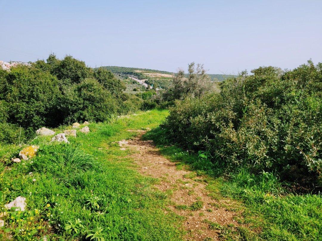 אזור מנשה ועמק חפר - טיול בקציר