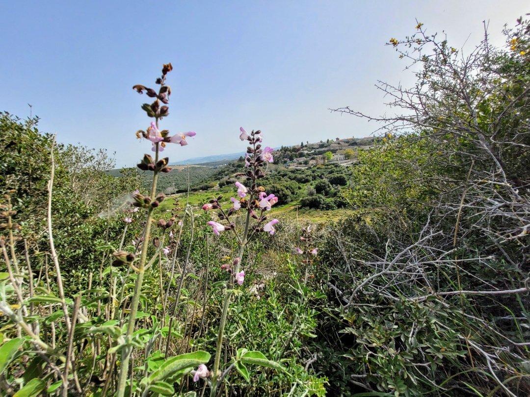 פריחות באזור מנשה ועמק חפר