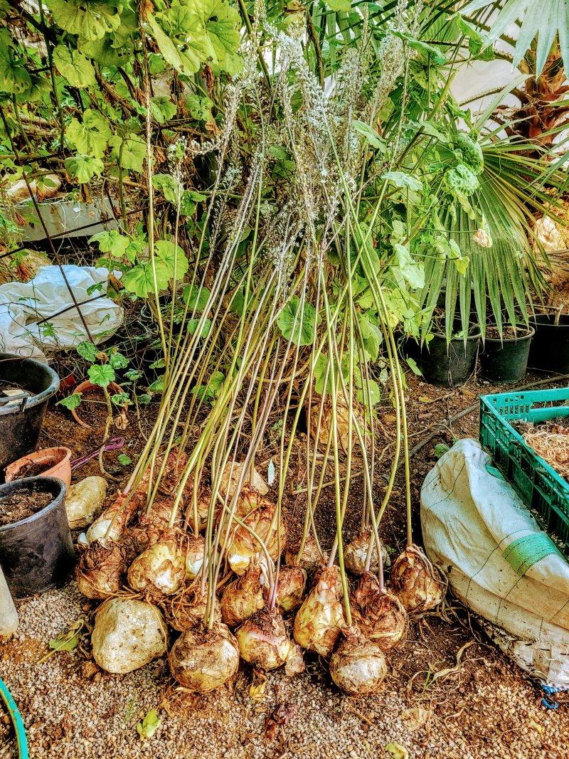 """משתלת זרעים מציון כרם מהר""""ל"""