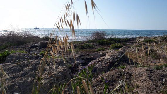 חופים בגליל המערבי